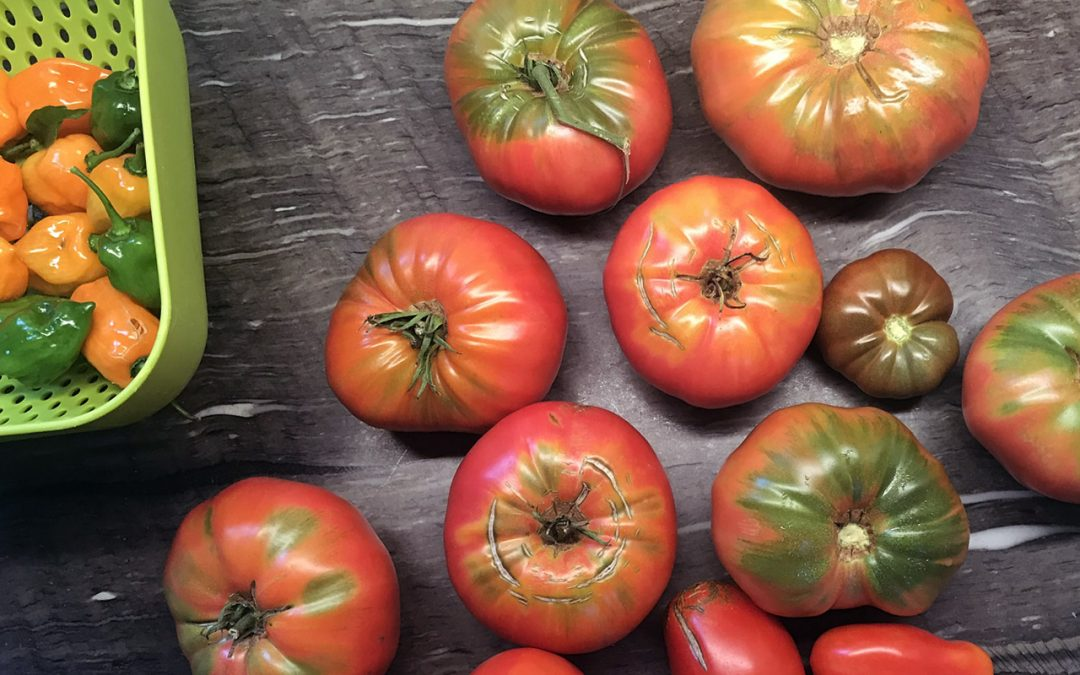 Not Quite Done With The Tomatoes
